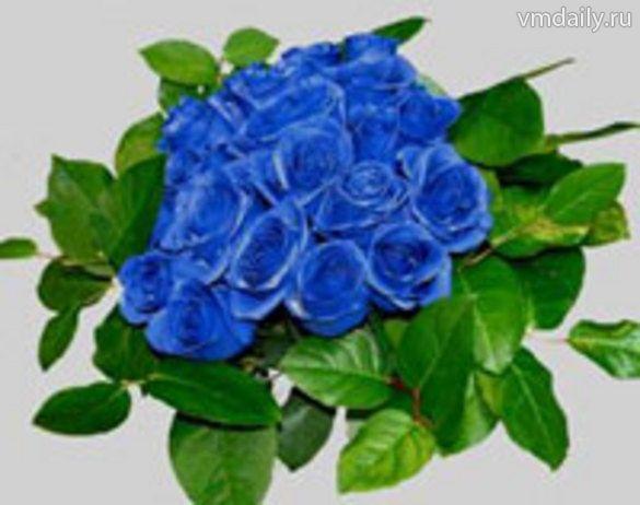 Синие розы синие розы…