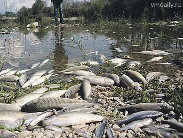 рыбалка в бронницах москва река едят ли рыбу