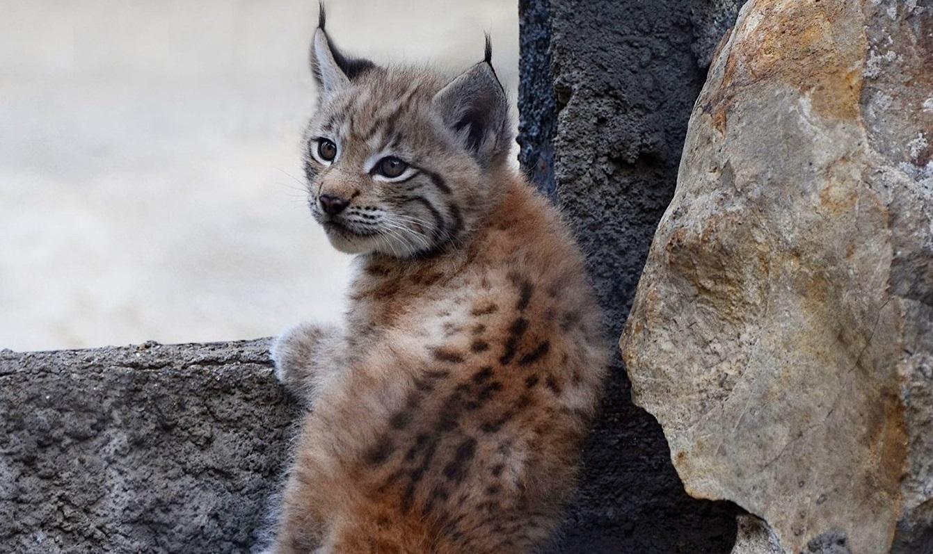 Рыси, сурикаты и фламинго: более 150 детенышей родились в Московском зоопарке