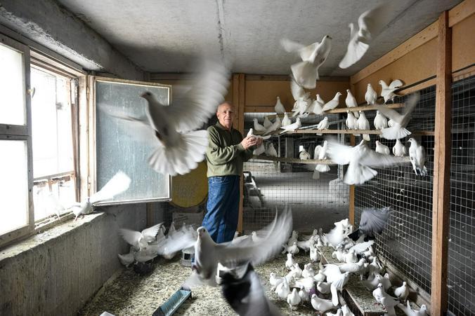 По словам Юрия Шмелева, жители дома не жалуются на голубятню / Вечерняя Москва / Ирина Хлебникова, «Вечерняя Москва»