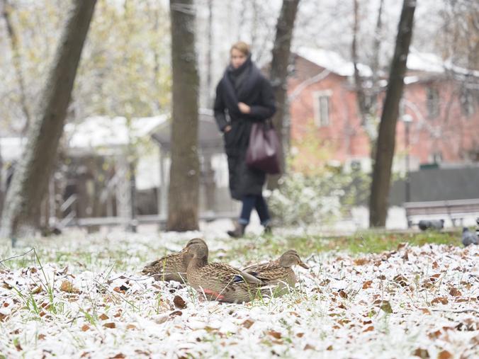 До конца этой недели первый снег растаять не должен / Антон Гердо, «Вечерняя Москва»