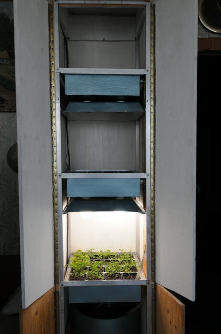 Выращенные в балконной теплице зелень петрушки / Светлана Колоскова, «Вечерняя Москва»