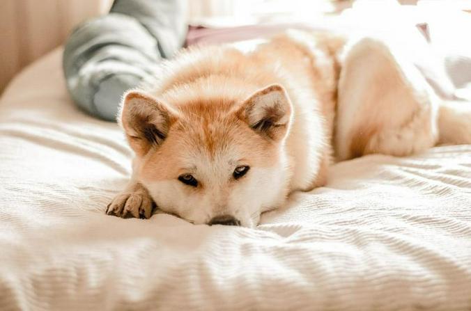 Между тем бродячих собак в городе объективно стало меньше / pixabay.com