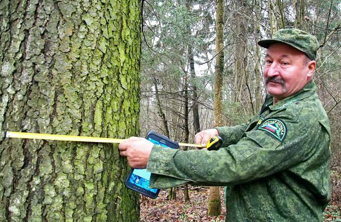 Перед отправкой заявки на конкурс новогодних деревьев он оценивает их диаметр на глаз или мерной лентой / Элина Максимова, «Вечерняя Москва»