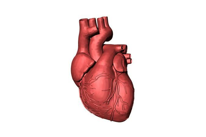 «Выращивание» органов в специальных лабораториях позволит сделать процедуру по замене, например, сердца такой же привычной / pixabay.com