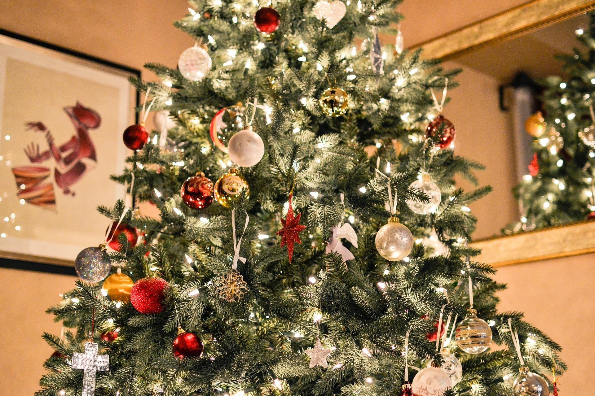 того, картинки самые красивые елки на новый год одной фотосессии мной