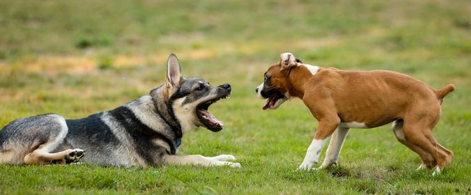Если человек завел агрессивную собаку, ему стоит обратиться за помощью к специалисту / Free / pixabay.com