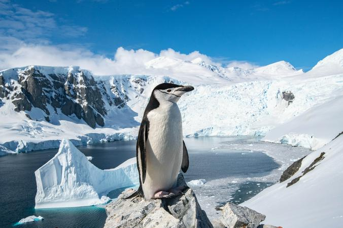 Снимок антарктического пингвина из коллекции фотографа Станислава Захарова / Станислав Захаров