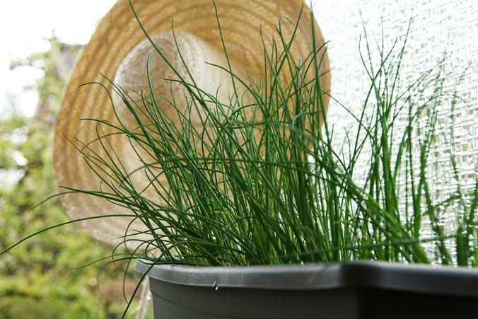Петрушку, укроп и лук можно выращивать в специальных емкостях дома, а когда они слегка взойдут, перенести в теплицу / pixabay.com/ru