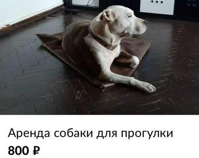 скриншот сайта https://www.avito.ru/