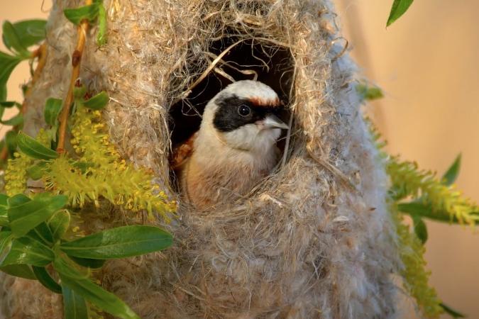 Пушистое гнездо краснокнижной птицы заметили в Москве