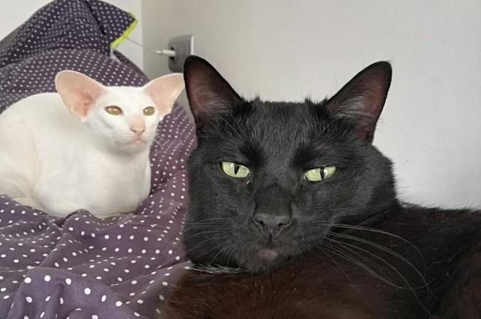 Я никогда не любил кошек, но так сложилось, что у меня их двое: мальчик и… тоже мальчик. Барсик и Квики / Виталий Журбин