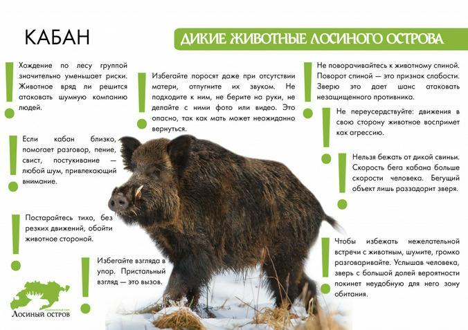 elkisland.ru / сайт парка «Лосиный остров»