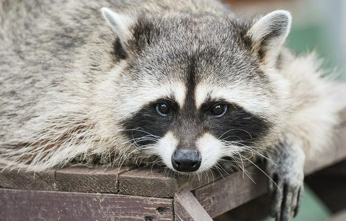 Не мучайте бедных животных своей быстропроходящей любовью / mos.ru