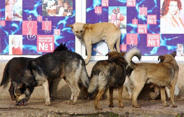 """Бездомные собаки на одной из улиц города / Агентство """"Фото ИТАР-ТАСС"""""""