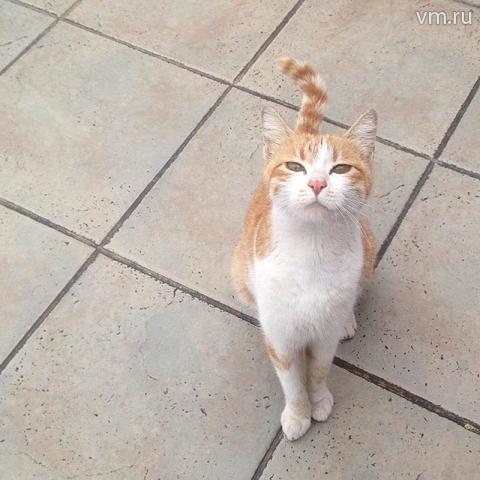 Кошки помогают предотвратить появление астмы удетей— Ученые