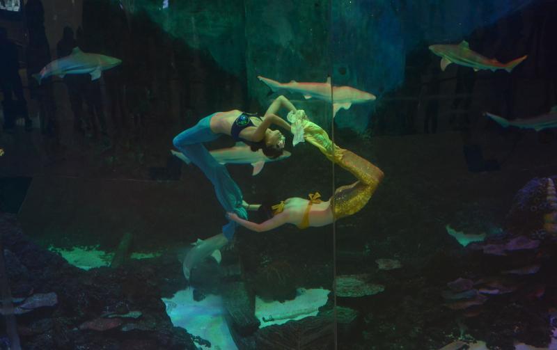 Существование подводного племени ученые не отрицают. Ведь Земля, по сути, малоизученный объект, а отсутствие сведений про разумную подводную жизнь еще не означает, что ее вовсе нет / Zuma/TASS