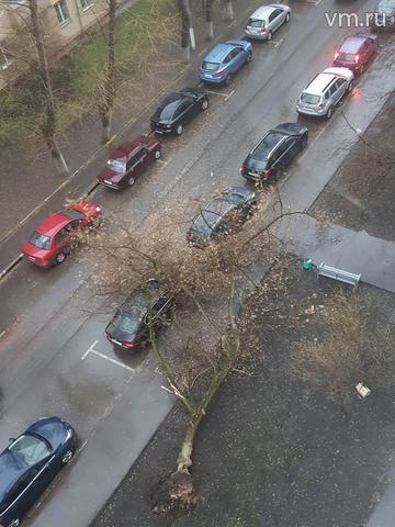 Упавшее дерево на Шестой Кожуховской улице / Денис Червяков