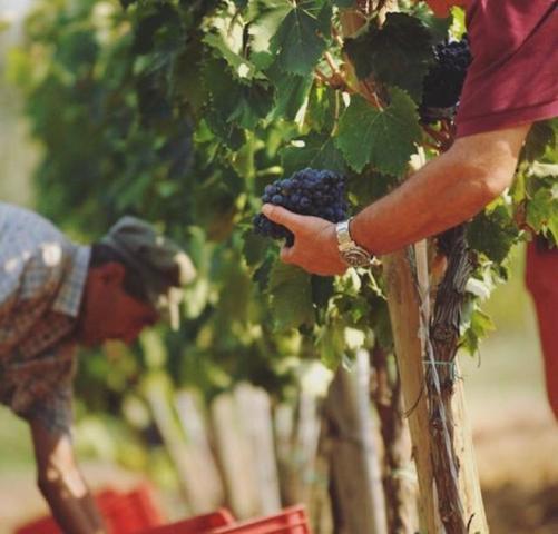 Можно и нужно приобрести нежнейшие фермерские продукты — сыры, творог, масла и многое другое / Instagram Большого Фестиваля Италии / @grand_italy_fest