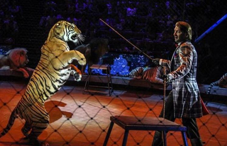 Артист был уверен, что тигрица разорвет его / https://www.instagram.com/zapashny.ru