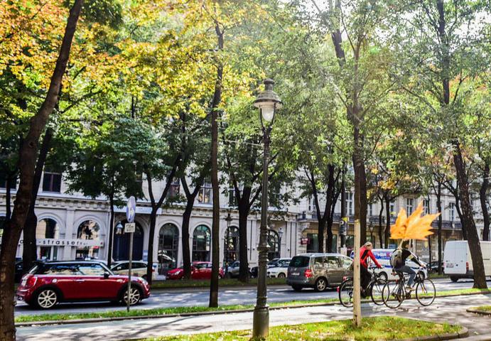 """Первыми опадают листья с березы, а затем с липы и черемухи / Пелагия Замятина, """"Вечерняя Москва"""""""