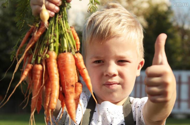 """По мнению эксперта, в летний сезон жителям просто доступнее овощи и фрукты. На фото Максим Волков помогает собирать урожай в «Зелёной школе» Парка Горького / Наталия Нечаева """"Вечерняя Москва"""""""