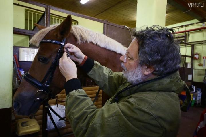 """Коновод на лошадях не ездит, а только кормит, чистит, седлает, водит «на корде» / Влад Кулигин, """"Вечерняя Москва"""""""