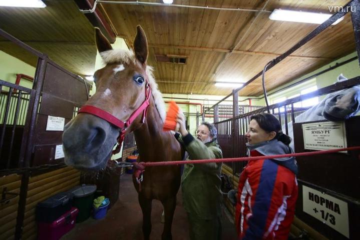 """Лошадь надо чистить несколько раз в день / Влад Кулигин, """"Вечерняя Москва"""""""