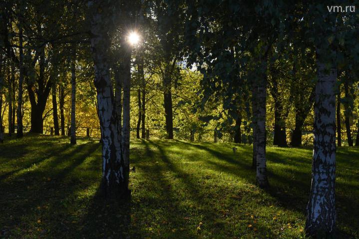 Управление будет бороться с незаконной вырубкой лесов / Александр Кожохин, «Вечерняя Москва»