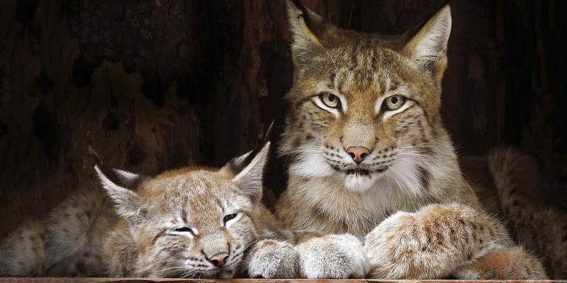 На новый сезон животных поместят в специальные теплые вольеры / официальный сайт мэра Москвы