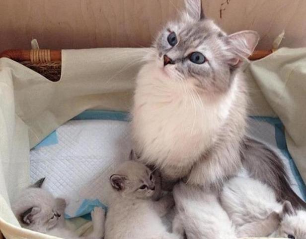 Кошка Милка с котятами / https://www.instagram.com/damedvedev/?hl=ru/Официальный Инстаграм Дмитрия Медведева