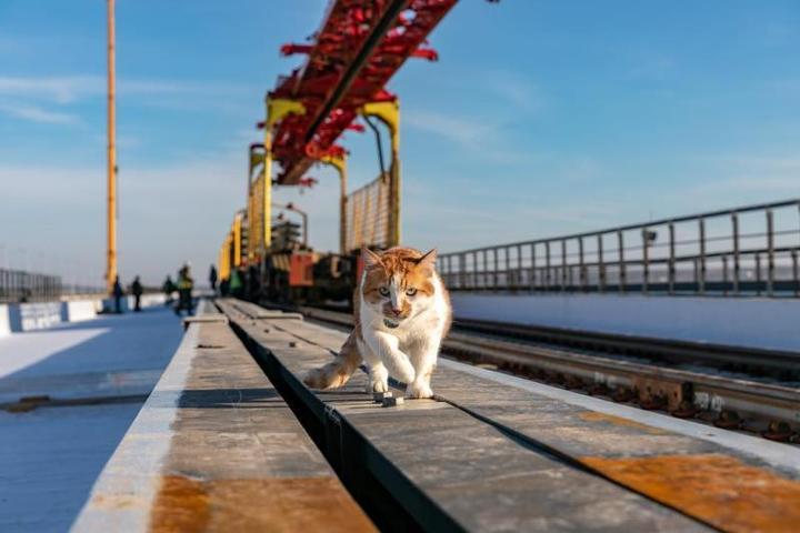 Кот Мостик / https://www.instagram.com/cat_the_most/?hl=ru
