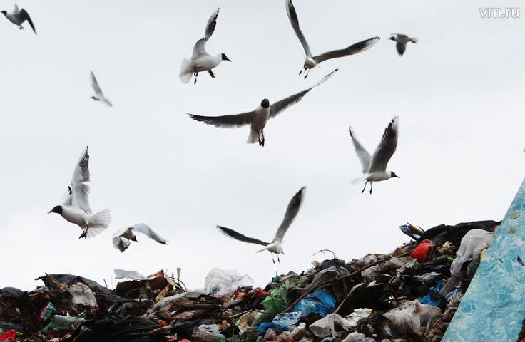 Глобальное потепление климата и миллиарды тон мусора, скопившиеся на Земле, угрожают человечеству не меньше, чем террористы / Наталия Нечаева, «Вечерняя Москва»