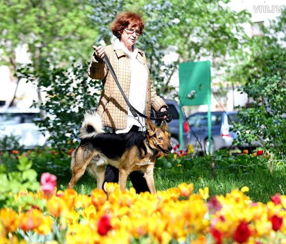 Выгульщик —это не совсем работа мечты, а, скорее, оплачиваемое хобби для тех, кто любит животных / Алексей Орлов,  «Вечерняя Москва»