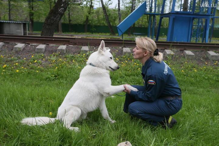 Собак в отряд отбирают специально — они должны быть дружелюбными, любить людей и не кусаться / Владимир Смоляков, «Вечерняя Москва»
