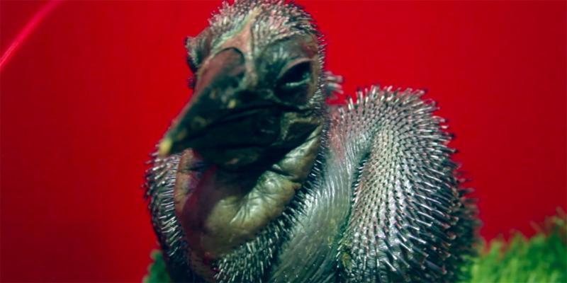 Ученые полагают, что кафрский ворон может исчезнуть в естественной среде обитания через 10–15 лет / Официальный сайт мэра Москвы (https://www.mos.ru/)