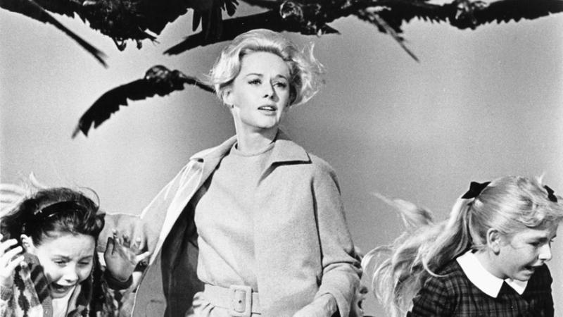 Орнитолог отметил:чем дальше вы удаляетесь от источника агрессии, тем меньше опасность / Кадр из фильма «Птицы» (1963)