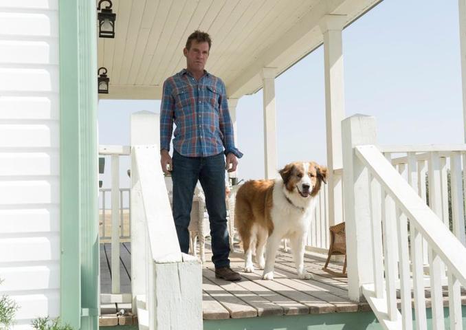 Во второй части к нам снова возвращается полюбившийся пес Бэйли, который никак не может оставить свою любимую семью без своего присутствия и возвращается к ним в каждой новой жизни, несмотря ни на какие препятствия / Кадр из фильма