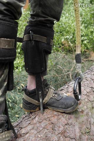 У команды Могучева к полноценному альпинистскому снаряжению имеется специальное снаряжение для арбористики / Антон Гердо, «Вечерняя Москва»