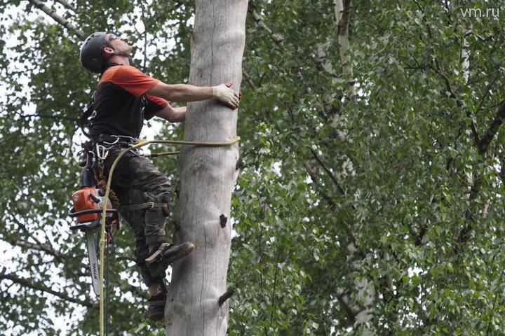 Арбористика считается самым опасным по сложности промышленным альпинизмом / Антон Гердо, «Вечерняя Москва»