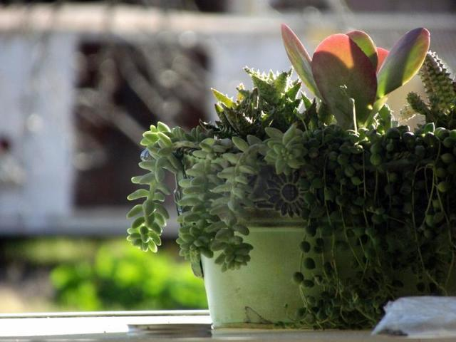 С растения можно считывать состояние человека и наоборот / https://pixabay.com/ru