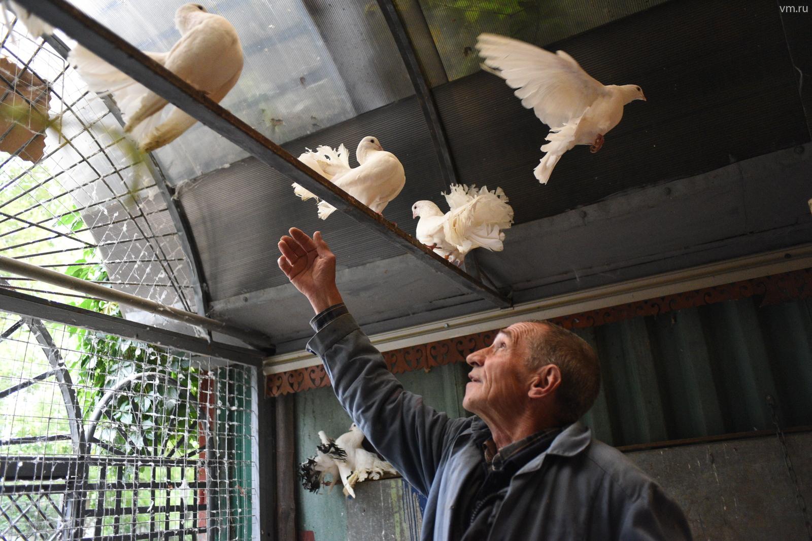 Старая голубятня Москвы в Нагатинском Затоне