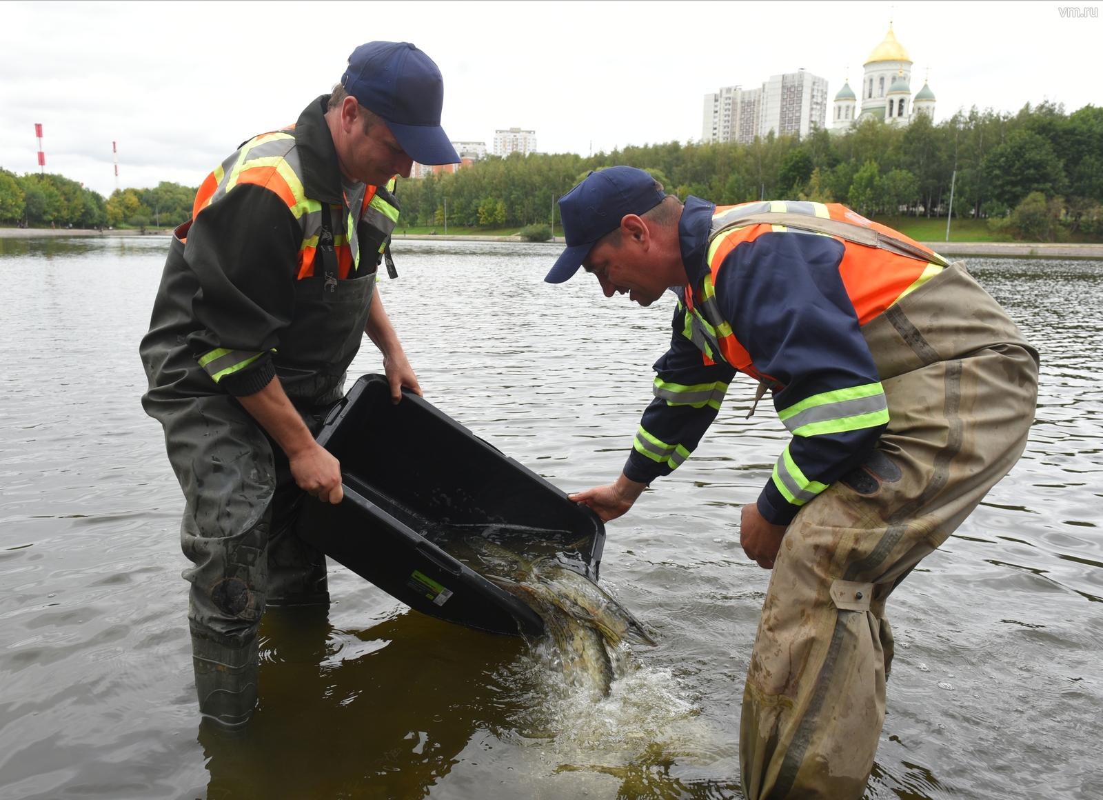Сотрудники Московодостока Николай Гороховик (слева) и Алексей Минтюков (справа) выпускают мальков рыб в пруд в Солнцево