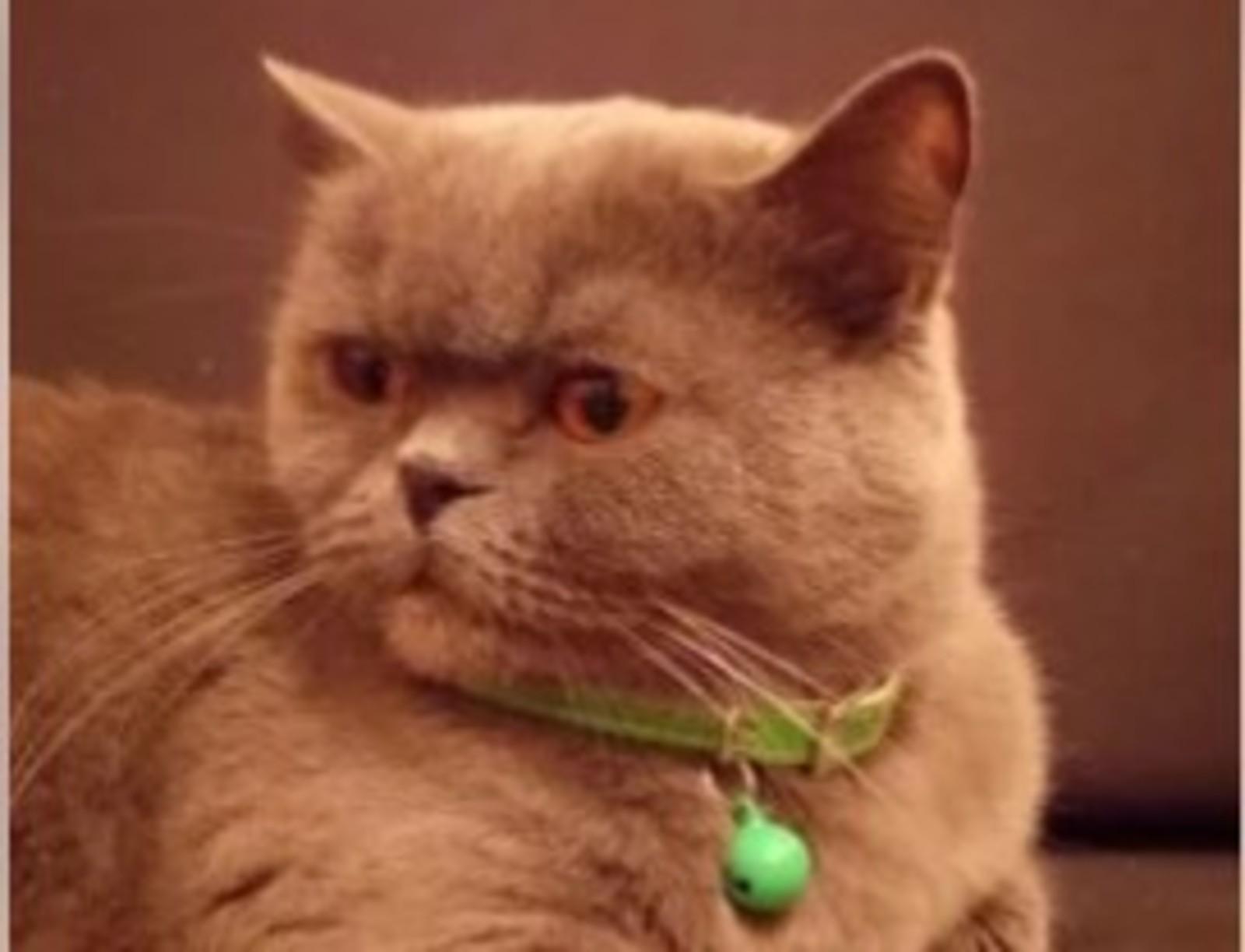 Гресси любит сладкое, а также «отгоняет соседок от мужа, лечит от похмелья» / Фотография с сайта «Авито» (https://www.avito.ru/rostov-na-donu)